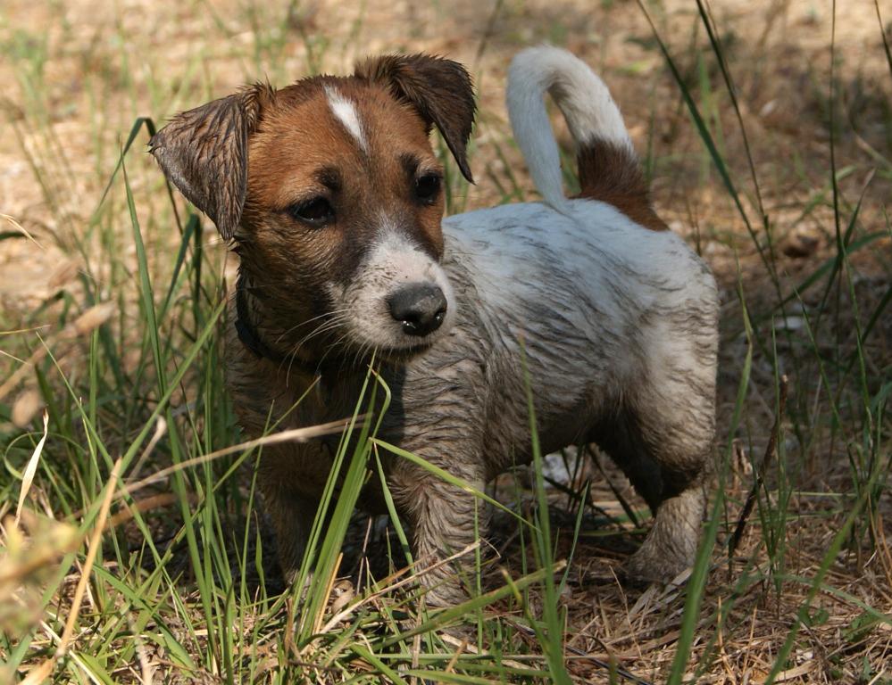 Devon Electra Bell Mascalzone Canino